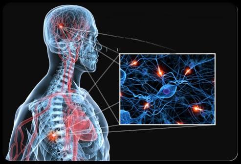 Image result for سیستم تولید مخدر طبیعی بدن